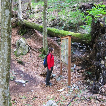"Hikers exploring the forest along ""Natur-Spuren"" (nature's traces) adventure trail on Wurbauerkogel.  